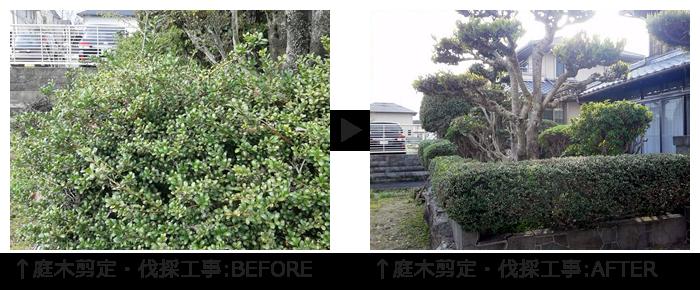 庭木剪定・伐採工事
